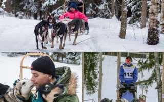 Izbrauciens ar suņa pajūgu pa sniegu
